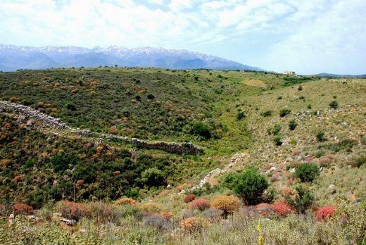 Türkiye'nin endemik bitki türleri yönünden