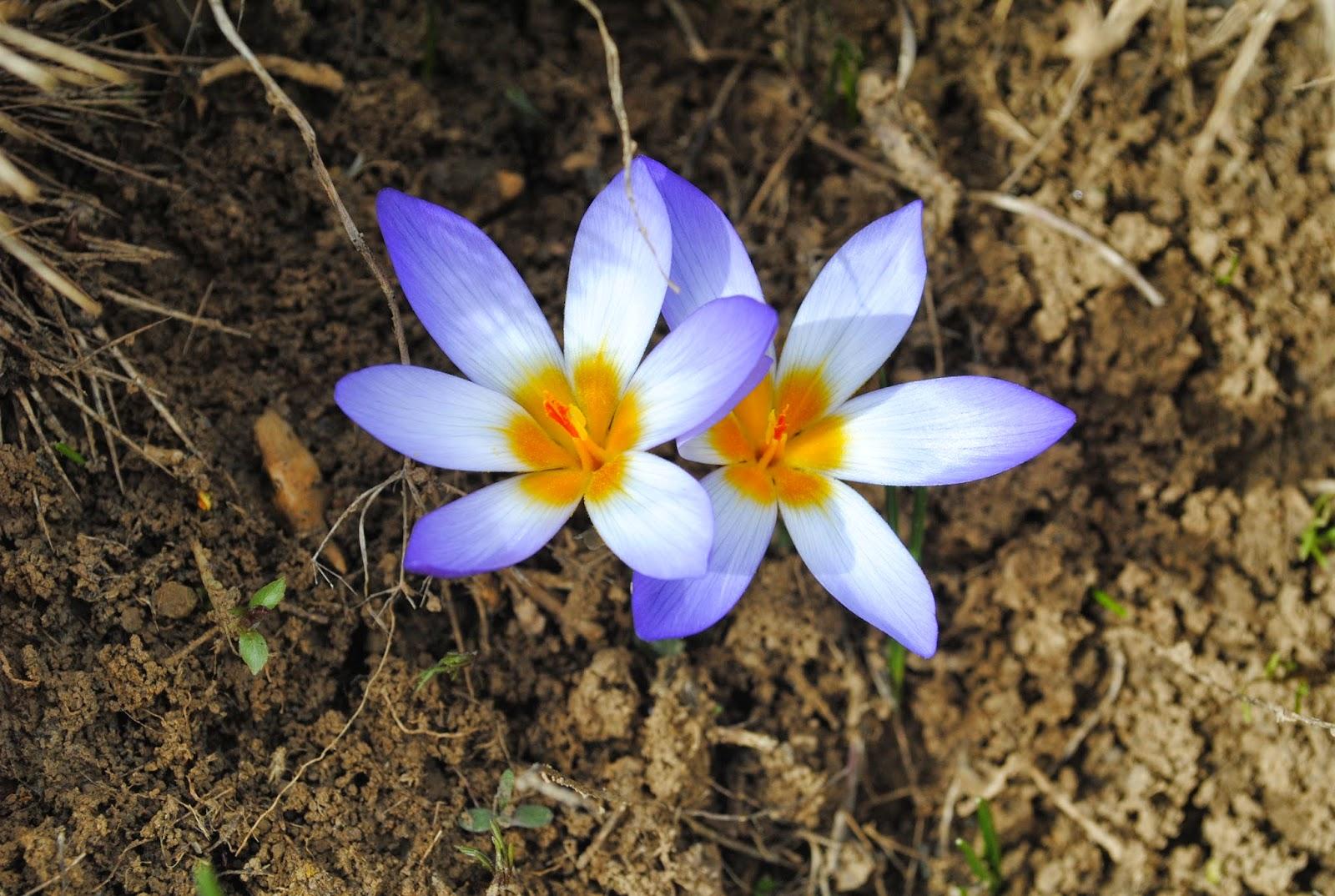 Antalya Bitki Örtüsü ve Endemik Bitki türleri