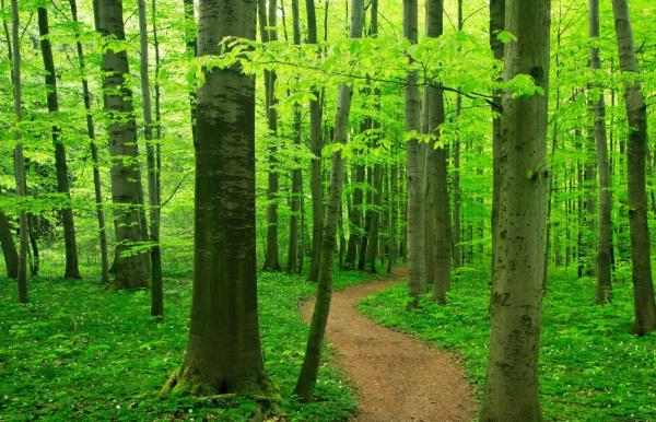 5 Haziran Dünya Çevre Günü – Ekolojinin Değeri