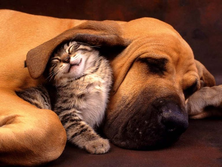4 Ekim Hayvan Hakları Günü ve Birlikte Yaşam Bilinci