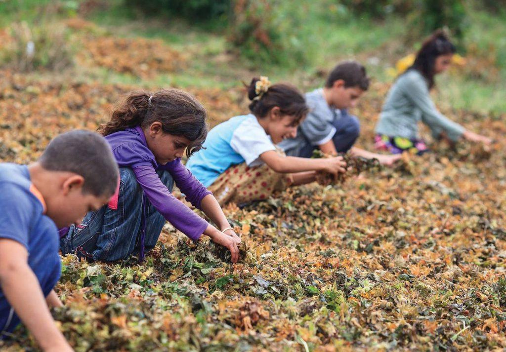 çocuk işçilerle mücadele ulusal programı