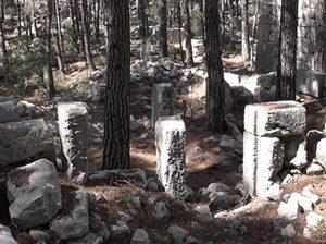 Sia Antik Kenti artık ormanların kenti olmuştur.